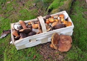 proteïne dieet recepten gemengde champignons